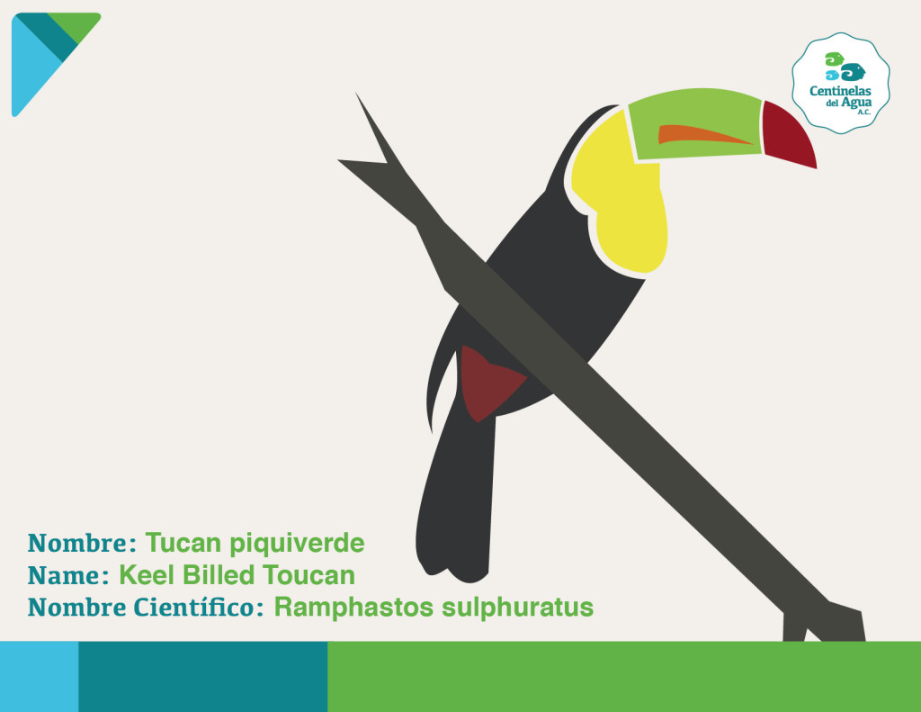 Ave - Tucan-01