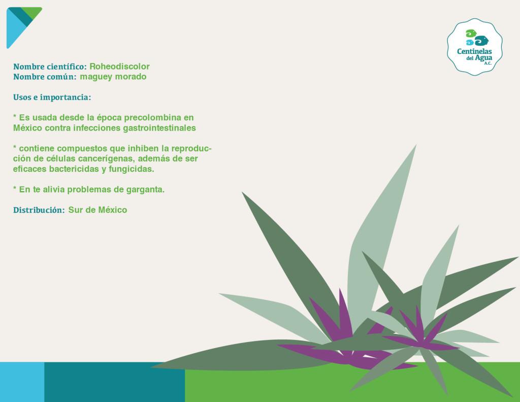 Flora - Maguey Morado-01