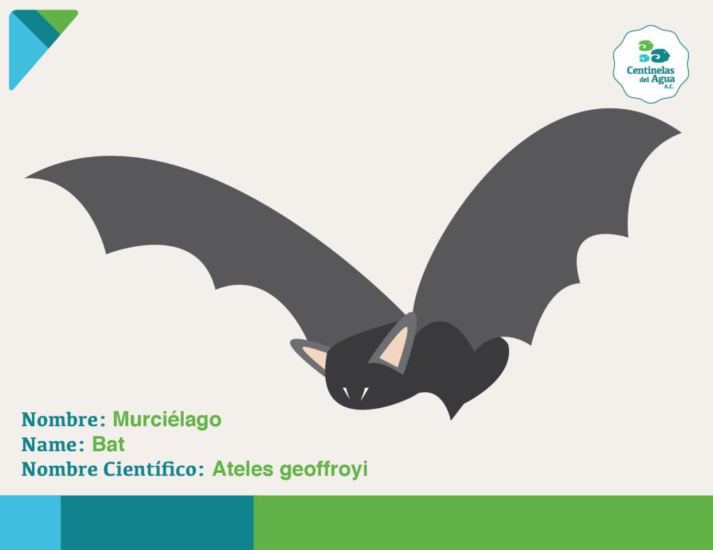 Mamifero - Murciélago-01